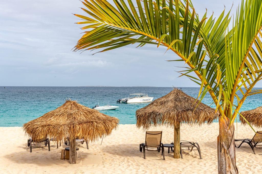 FrangiCat, Frangipani Beach Resort Anguilla